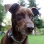 Sammy Hund